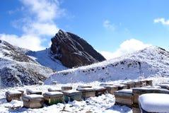 Alveari sulla neve   Immagini Stock Libere da Diritti