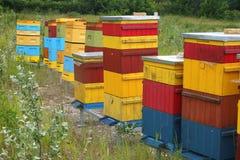 Alveari variopinti per le api Fotografie Stock