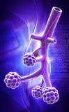 Alveoli ilustracji