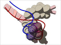 Alveoli. Vector illustration of some alveoli Royalty Free Stock Image