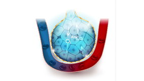 Alveoli anatomie, oddychanie royalty ilustracja