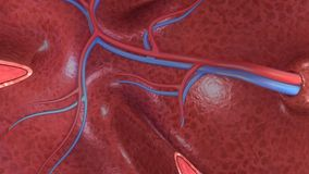 Alveoli section Royalty Free Stock Photos