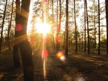 Alvoreça em uma luz do sol da clareira da floresta com uma grama nova Foto de Stock Royalty Free
