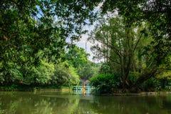 Alvoreça sobre o lago no parque da cidade de Guangzhou, China imagem de stock royalty free
