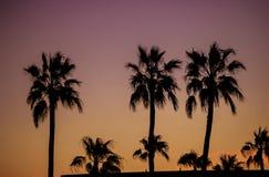Alvorecer do Estados Unidos de Phoenix o Arizona das palmeiras fotos de stock