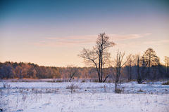 Alvorecer do inverno Nascer do sol na manhã do inverno Destino da neve landscape Foto de Stock Royalty Free