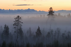 Alvorecer em uma floresta imagens de stock royalty free