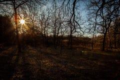 Alvorecer em uma floresta do pinho imagens de stock