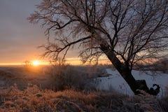 Alvorecer em uma manhã do inverno Fotografia de Stock Royalty Free