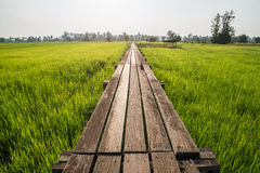 Alvorecer ensolarado em um campo em Tailândia fotos de stock