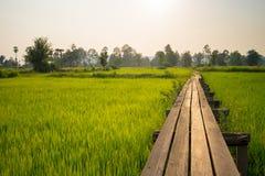 Alvorecer ensolarado em um campo em Tailândia fotografia de stock
