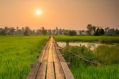Alvorecer ensolarado em um campo em Tailândia fotos de stock royalty free