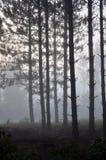 Alvorecer na floresta Fotografia de Stock