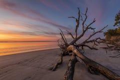 Alvorecer na praia da madeira lançada à costa - ilha de Jekyll fotografia de stock royalty free