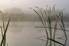 Alvorecer nevoento no lago fotos de stock