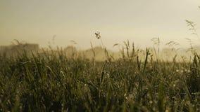 Alvorecer no campo os raios do sol 4K filme