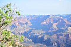 Alvorecer no parque nacional de Colorado Grand Canyon com pinheiro imagem de stock