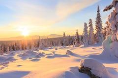 Alvorecer sobre a montanha e a floresta fotografia de stock