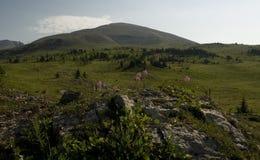 Alza de la sol en el parque nacional de Banff Fotografía de archivo