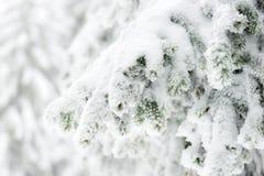 Alza del invierno Fotos de archivo libres de regalías
