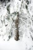Alza del invierno Imagen de archivo