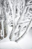 Alza del invierno Fotos de archivo