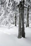 Alza del invierno Imagen de archivo libre de regalías