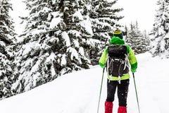 Alza del invierno en el bosque blanco fotos de archivo