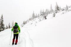 Alza del invierno en el bosque blanco al nevar foto de archivo libre de regalías