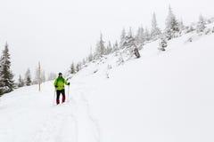 Alza del invierno en el bosque blanco al nevar fotografía de archivo libre de regalías