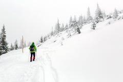 Alza del invierno en el bosque blanco al nevar fotos de archivo libres de regalías