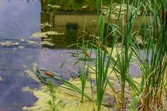 Alzaia del canale del Delaware e giunco, nuova speranza storica, PA fotografia stock libera da diritti