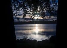 Alzando all'alba fra gli alberi immagine stock libera da diritti