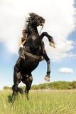 Alzar el caballo Foto de archivo libre de regalías