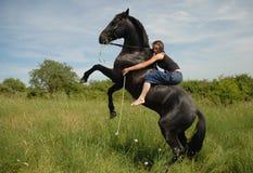Alzar el caballo negro Fotografía de archivo libre de regalías