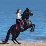 Alzar el semental negro andaluz y a la mujer joven en la playa Imágenes de archivo libres de regalías