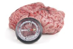 Alzheimer or parkinson brain has lost north desori. Ented and ill Stock Photos