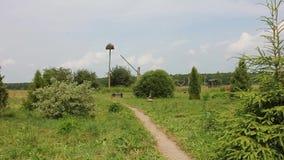 Aménageant en parc avec des arbres, des buissons et toute autre végétation banque de vidéos