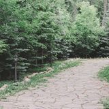 Aménagement dans le jardin Voie en pierre parmi des sapins et des buissons photo stock