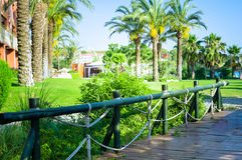 Aménagement tropical avec la plantation et les palmiers Images stock