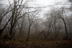 Aménagez avec le beau brouillard dans la forêt sur la colline ou traînez en parc par une forêt mystérieuse d'hiver avec des feuil photo stock