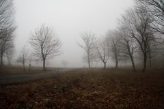 Aménagez avec le beau brouillard dans la forêt sur la colline ou traînez en parc par une forêt mystérieuse d'hiver avec des feuil photographie stock libre de droits