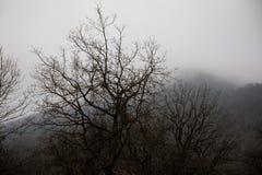 Aménagez avec le beau brouillard dans la forêt sur la colline ou traînez en parc par une forêt mystérieuse d'hiver avec des feuil photographie stock