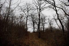 Aménagez avec le beau brouillard dans la forêt sur la colline ou traînez en parc par une forêt mystérieuse d'hiver avec des feuil images stock