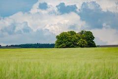 Aménagez en parc en été avec le soleil lumineux, les prés et le champ de maïs d'or à l'arrière-plan image stock