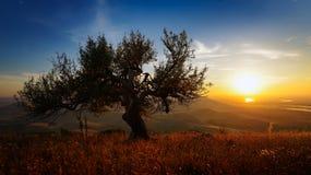 Aménagez en parc au coucher du soleil en automne, Dobrogea, Roumanie photos libres de droits