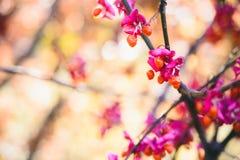 Aménagez en parc avec de pleines feuilles d'automne de couleur et lumière du soleil d'automne, au sujet de Photographie stock libre de droits