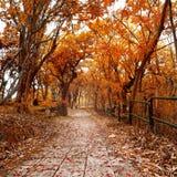 Aménagez en parc avec des arbres un jour ensoleillé en automne Photos stock