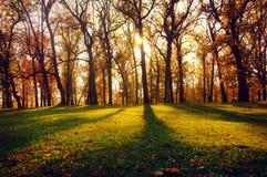 Aménagez en parc avec des faisceaux du soleil dans le bois d'automne Image libre de droits