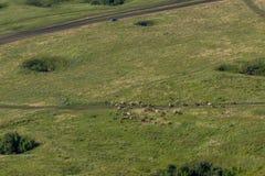 Aménagez en parc avec des vaches, le lac, vue de forêt de la montagne Toratau Photos stock